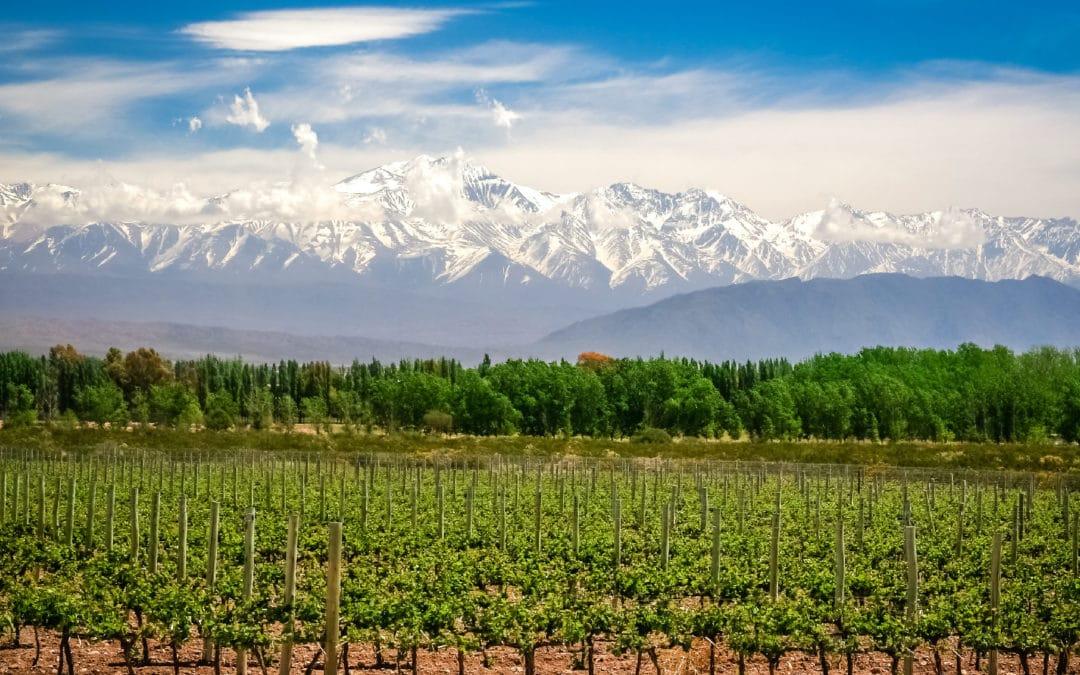 Argentyńskie białe wino: Balbo Torrontes
