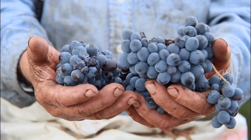 Producent miesiąca 02| 2020: Le Vigne di Sammarco