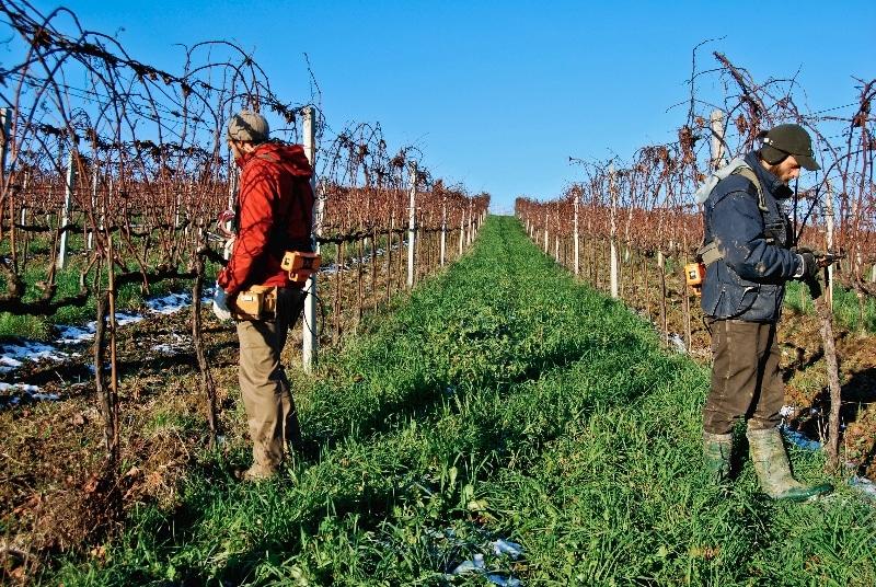 Wino jest darem natury: Orsi Vigna del Grotto 2018